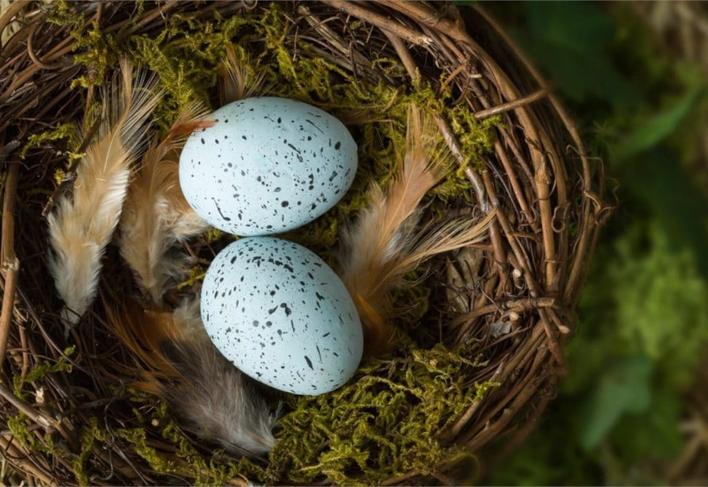 Your Retirement Nest Egg - Link Financial Advisory